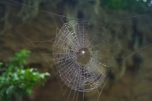 Bronx_Zoo_Spider_Web