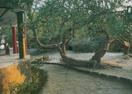 sacred grove in vrindavan